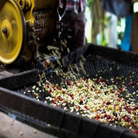 什么是咖啡豆的蜜处理(honeyprocess) 蜜处理法与巴西半水洗法之间的差异