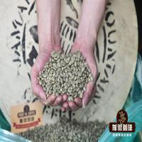 牙买加蓝山咖啡豆哪个牌子好?教你分辨什么是正宗蓝山咖啡豆。
