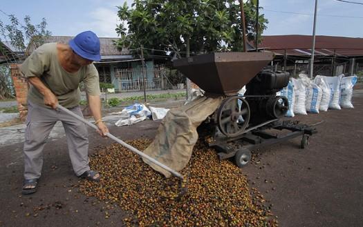 云南传统的咖啡处理技艺