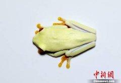 """北京从美入境邮包截获活体树蛙:申报为""""咖啡和茶"""""""
