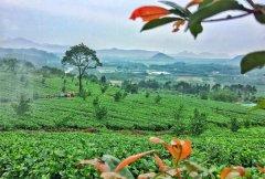 龙井茶是明前茶好还是雨前茶好?明前茶和雨前茶哪个更贵的区别